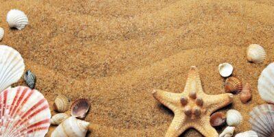 na zdjęciu piasek z plaży oraz muszelki w różnych kształtach